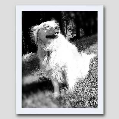 Redimat Wood Picture Frames Profile 9 Matte White